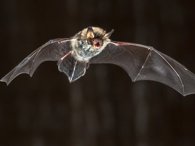 Things to Know About Bats